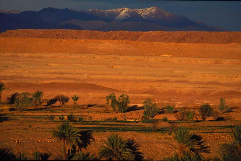 Palmy w pobliżu pustynii w Maroko