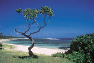 Rośliny na wybrzeżu Mauritius