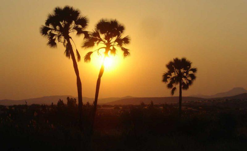 Wysooka palma na tle słońca Namibia
