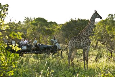 turyści przejeżdżający samochodem terenowym oberwujący żyrafę
