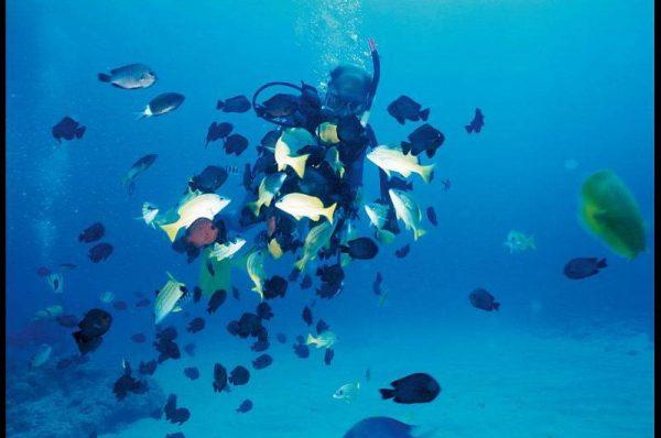 Nurkowanie Reunion