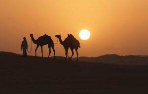 Arab prowadzący przez pustynię dwa wielbłądy na tle zachodzącego słońca
