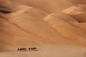 grupa tubylców wędrująca po pustyni Al Gharbia na wielbłądach
