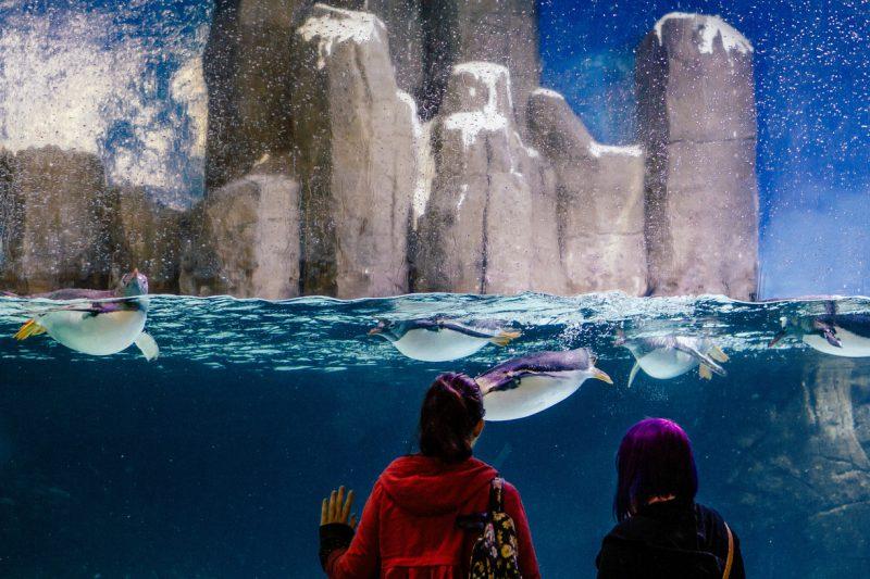 para turystów obserwująca pingwiny za szybą w oceanarium