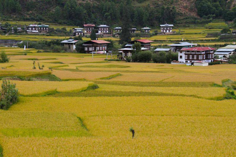 widziana z oddali wioska Bhutan położona na zielonych terenach Himalajów