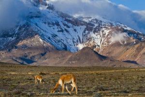 Dzikie zwierzęta na tle góry, Andy Ekwador