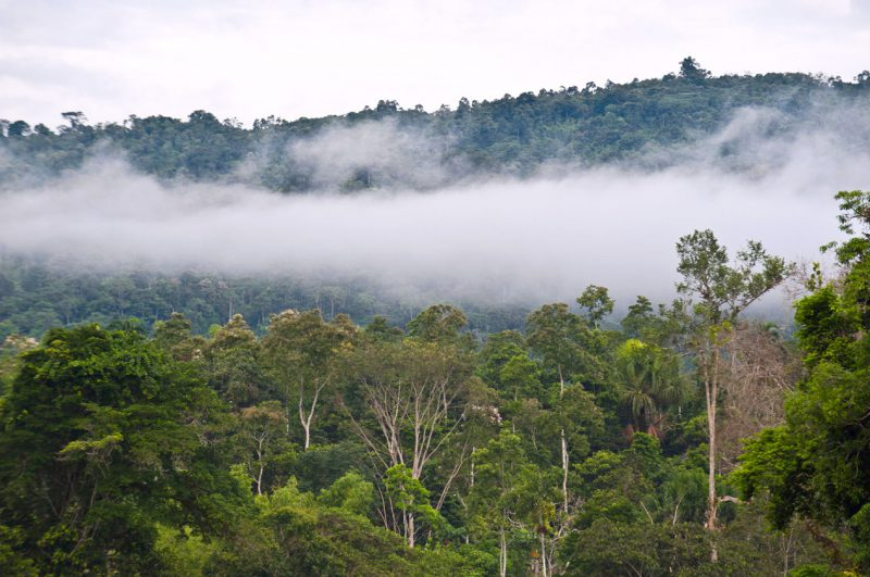 Mgła nad dżunglą, Ekwador