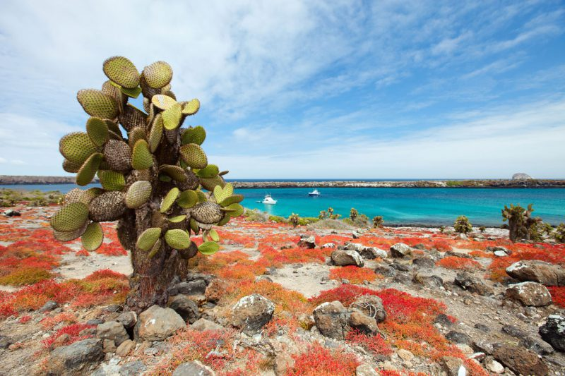 Niesamowity kaktus i widok na morze, Galapagos, Ekwador