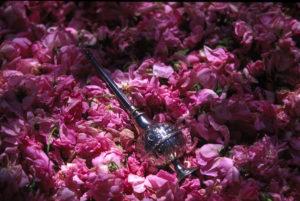 Marokańska róża