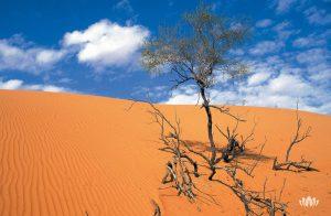 wyschnięte drzewo na środku pustynii w Omanie