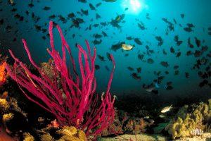 rafa koralowa, zbliżenie na kolorową roślinność, w tle ławica ryb