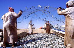 rybacy po połowie na brzegu morza wyrzucający ryby z sieci, Oman