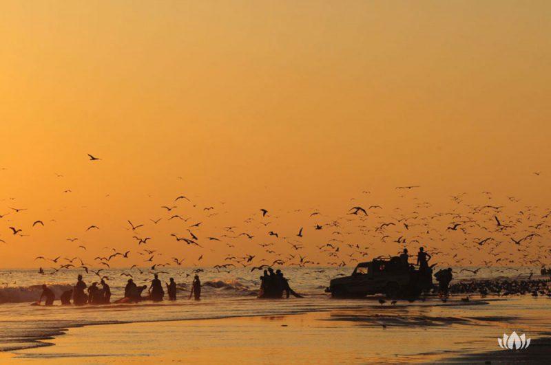 grupa ludzi nad brzegiem morza o zachodzie słońca