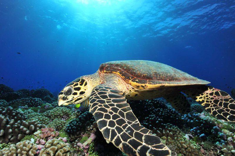 zbliżenie na dużego żłówia przemierzającego głębiny