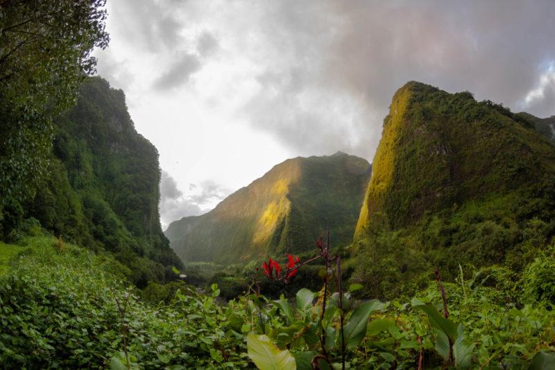 Góry i roślinność Reunion
