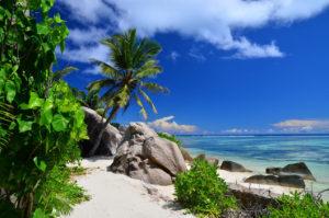 Roślinność na plaży Seszele