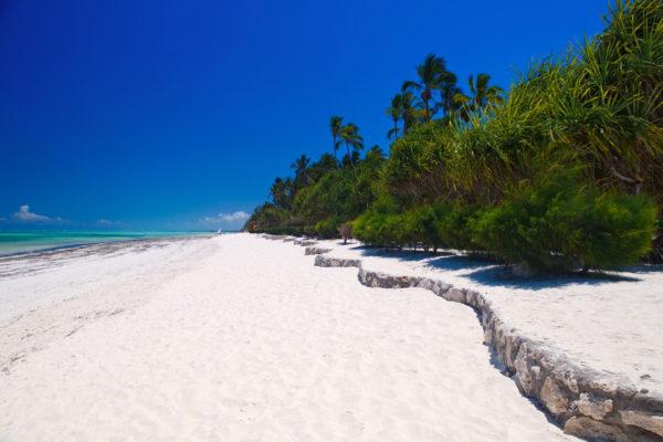 Plaża z kamiennym murkiem w zanzibarze