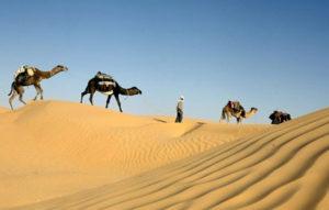karawan wielbłądów tunisie