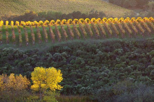 oświetlone późnym popołudniem wzgórza Chalk Hills