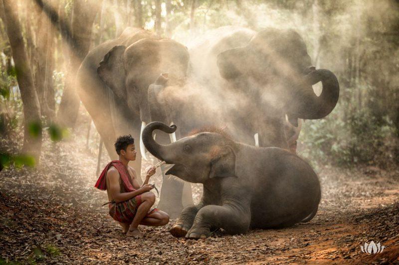 Słonie w lesie, mieszkaniec wioski Chang z małym słoniem