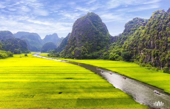 Pole Ryżowe w Wietnamie